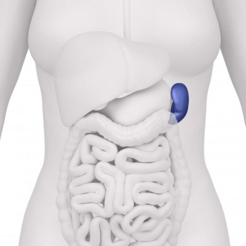 Spleen Pain Location